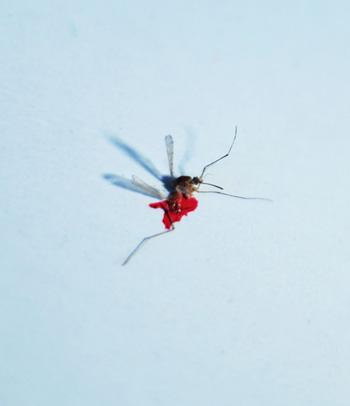 La femme moustique